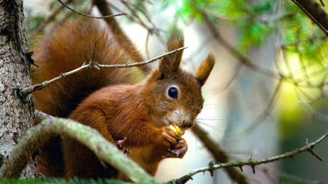 31 eichhörnchen bilder zum drucken - besten bilder von