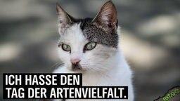 """Eine Katze mit dunklem Bärtchen und Scheitel: """"Ich hasse den Tag der Artenvielfalt!"""""""