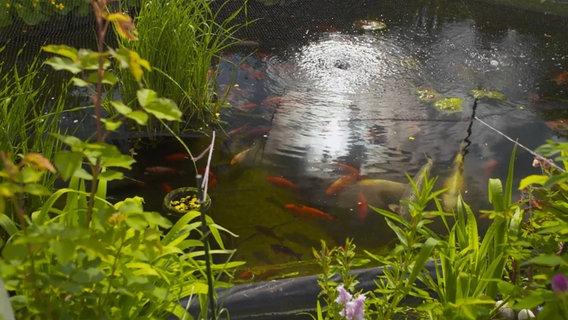 Gartenteich anlegen: Wie geht das? | NDR.de - Ratgeber - Garten