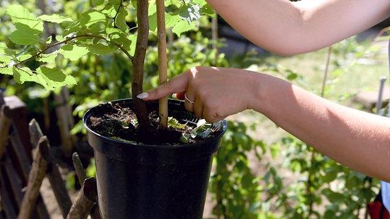 gartendocs432_v-contentgross Heckenpflanzen Anspruchslos