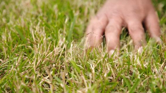 Wildgras Im Rasen Entfernen