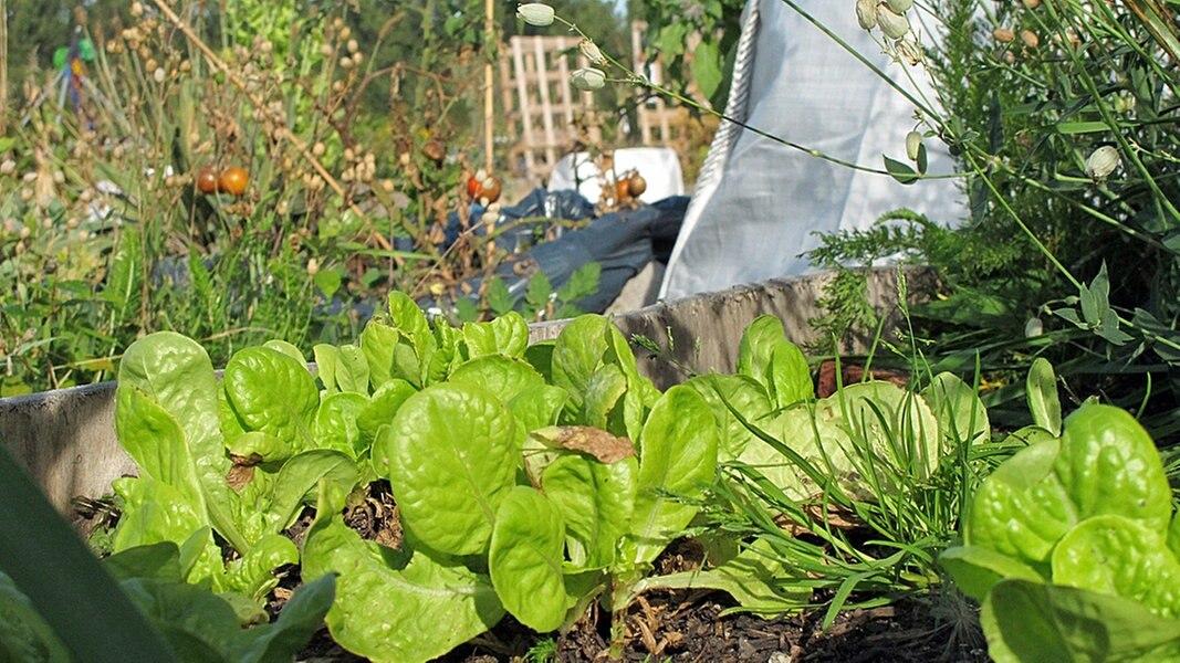 urban gardening g rtnern in der stadt ratgeber garten. Black Bedroom Furniture Sets. Home Design Ideas