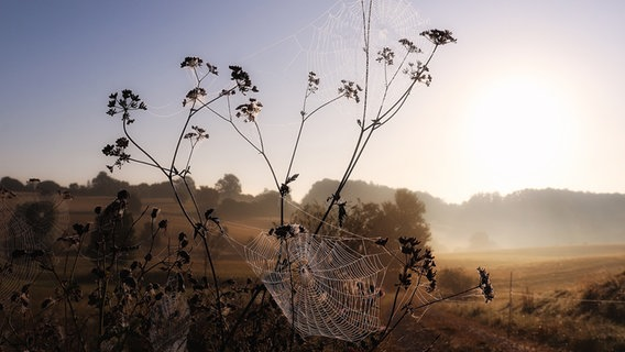 Spinnennetze glänzen in der Sonne. © NDR Foto: Christian Wuerzbach