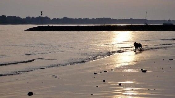 Hund läuft am Falkensteiner Ufer entlang. © Elisabeth Lierschof Foto: Elisabeth Lierschof