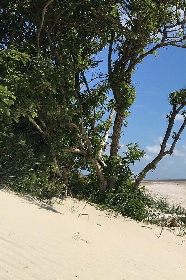 Langeoog - Insel-Idyll im ostfriesischen Wattenmeer