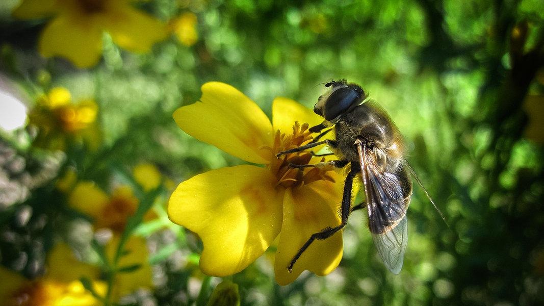 Garten gestalten: Lebensraum für Insekten schaffen