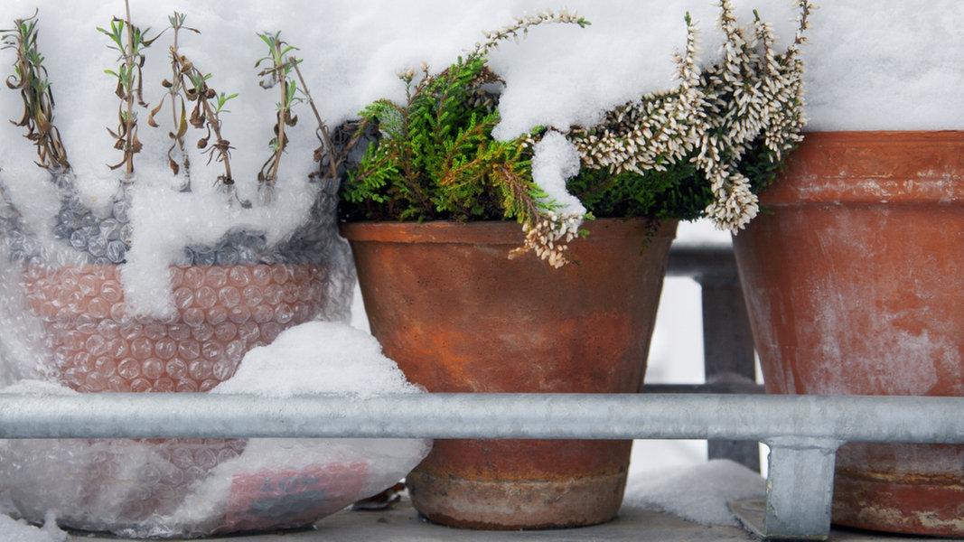 garten im herbst pflanzen vor k lte sch tzen ratgeber garten zierpflanzen. Black Bedroom Furniture Sets. Home Design Ideas