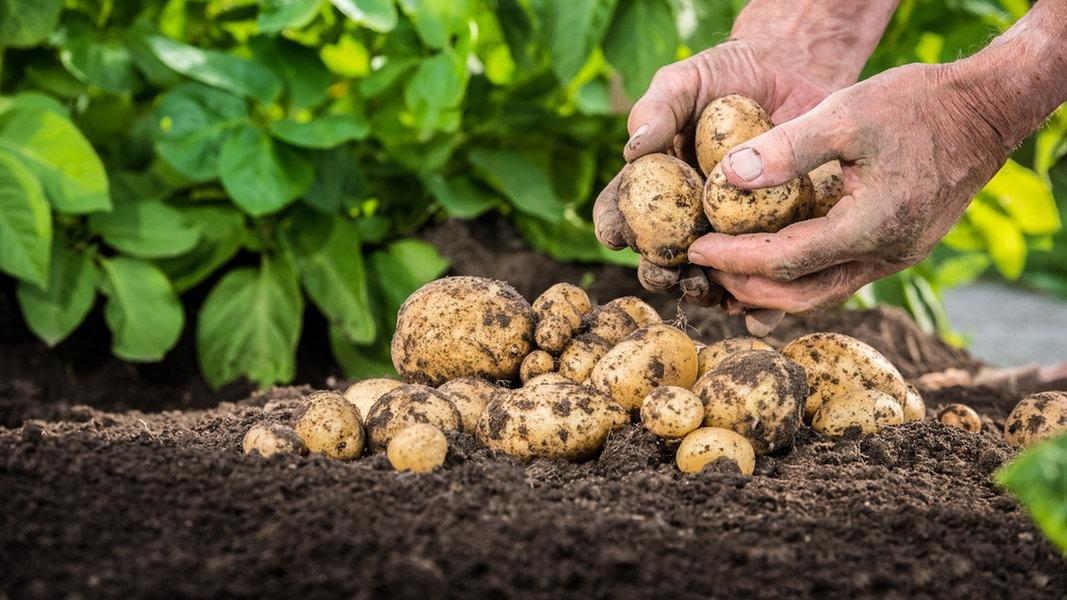 Nährstoffe Kartoffel
