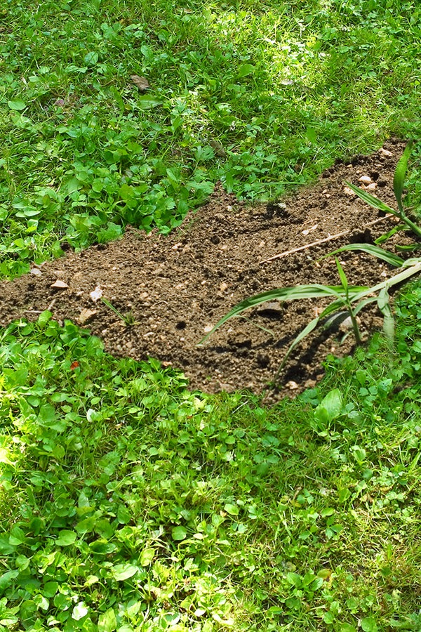 Atemberaubend Was hilft gegen Lücken im Rasen? | NDR.de - Ratgeber - Garten &QI_81