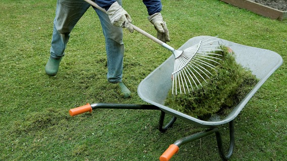 Moos Und Unkraut Im Rasen Entfernen Ndr De Ratgeber Garten