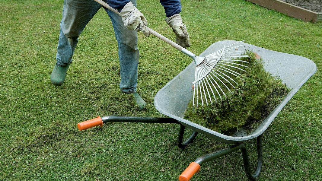Moos Und Unkraut Im Rasen Entfernen Ndrde Ratgeber Garten