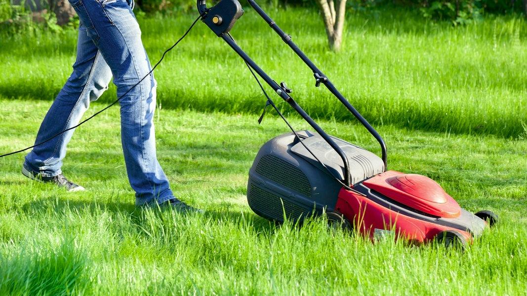 Tipps Fur Den Perfekten Rasen Ndr De Ratgeber Garten