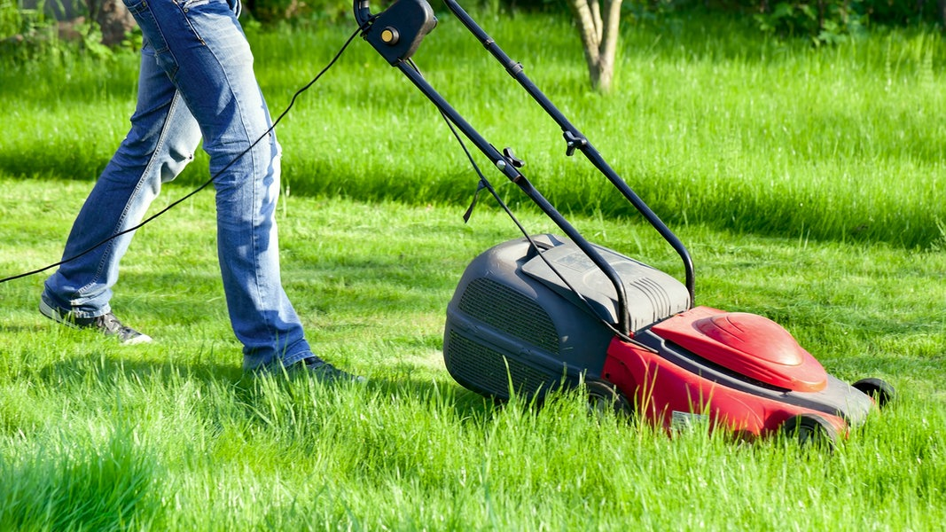 Tipps Für Den Perfekten Rasen Ndrde Ratgeber Garten