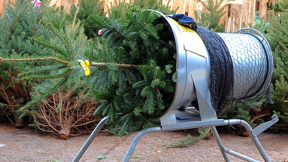 Wien Weihnachtsbaum Kaufen.So Viel Gift Steckt Im Weihnachtsbaum Ndr De Ratgeber