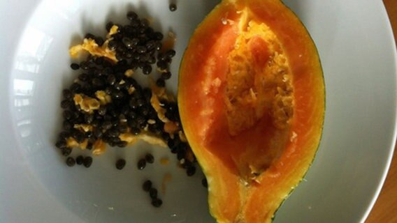 vitaminbombe zum selbstziehen papaya ratgeber. Black Bedroom Furniture Sets. Home Design Ideas