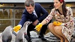 Kronprinz Frederik und seine Frau Mary füttern Pinguine im Stralsunder Ozeaneum © dpa Bildfunk