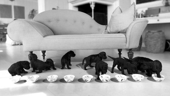 Königlicher Hundenachwuchs in Norwegen © Veronica Melå /Utenfor Allfarvei AS / Det kongelige hoff