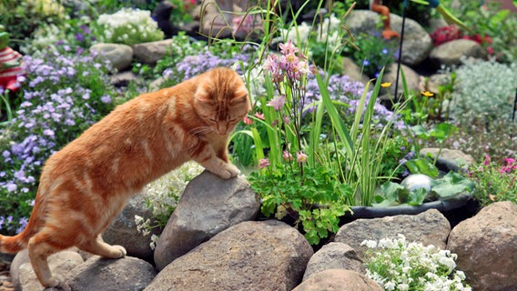 Einen Mini Gartenteich Anlegen Ndr De Ratgeber Garten
