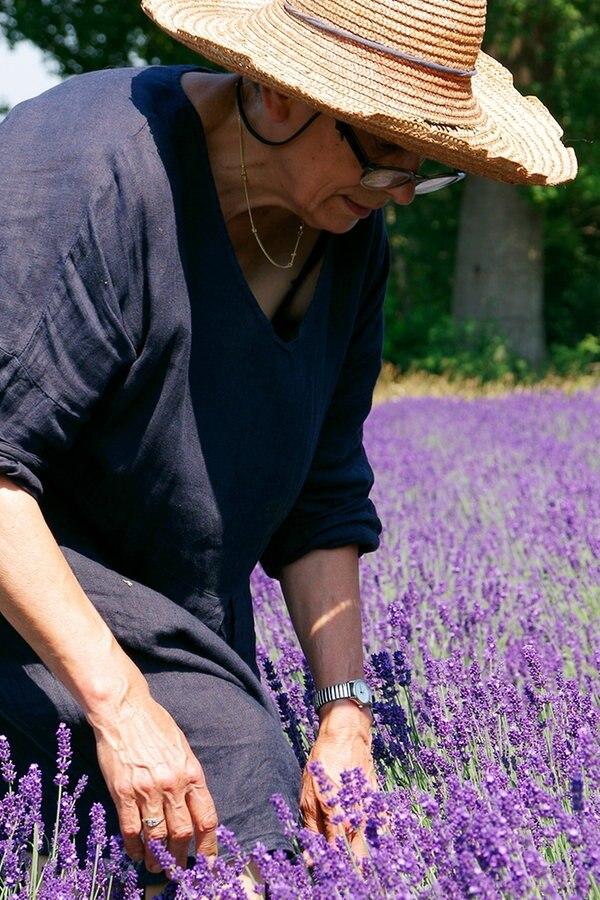 Ein Duft von Lavendel im Norden