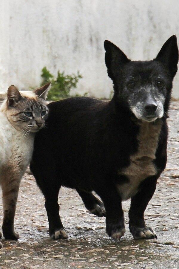 Hunde und Katzen in MV sollen Mikrochips bekommen
