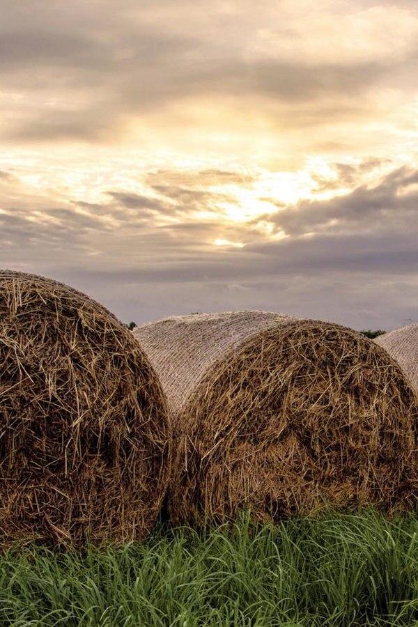 Erste Landwirte stellen Anträge für Futter