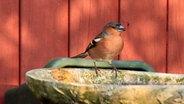 Vögel und Insekten mit Wasser versorgen