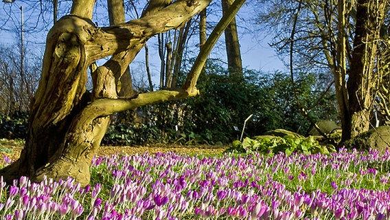 Parks Und Botanische Garten In Mecklenburg Vorpommern Ndr De