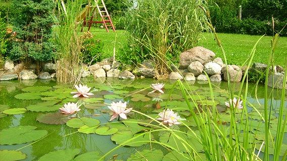 Atemberaubend Seerosen und Lotus pflanzen und pflegen | NDR.de - Ratgeber @YS_86