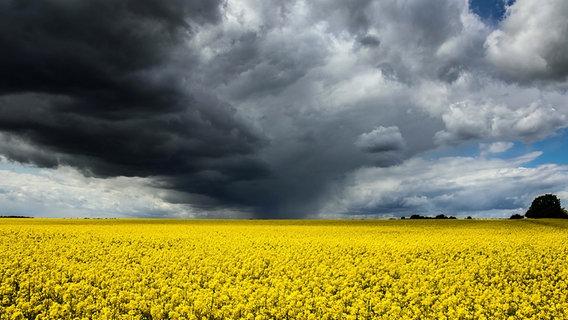 Eine Wolkenfront über einem Rapsfeld © NDR Foto: Torsten Schmeling aus Schwerin