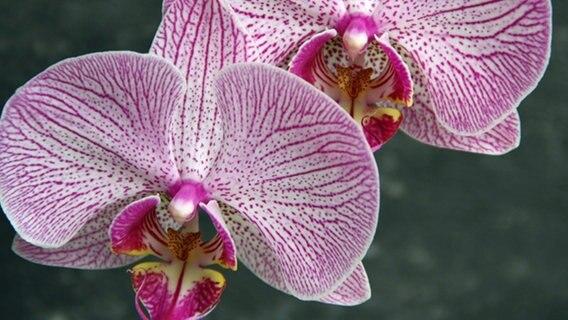 orchideen durch den winter bringen ratgeber garten zimmerpflanzen. Black Bedroom Furniture Sets. Home Design Ideas