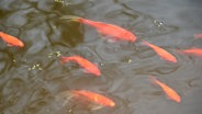 So wird der gartenteich winterfest ratgeber for Goldfische teich sauerstoff