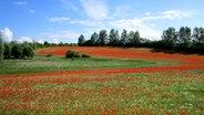 Weiter Blick über ein Mohnblumenfeld © NDR Foto: Heiko Müller aus Hof Triwalk