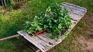 erdbeeren pflanzen pflegen und vermehren ratgeber garten nutzpflanzen. Black Bedroom Furniture Sets. Home Design Ideas