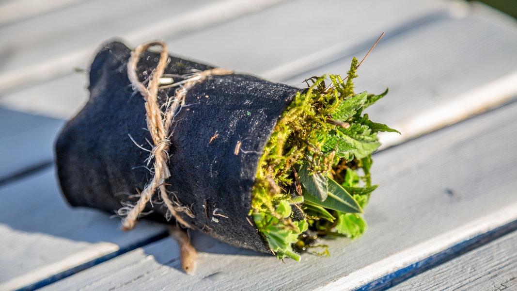 Pflanzen Im Sommer Mit Stecklingen Vermehren Ndr De Ratgeber