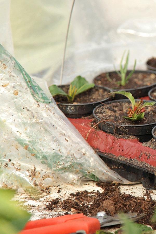 stecklinge schneiden und pflanzen bild 6 ratgeber garten zierpflanzen. Black Bedroom Furniture Sets. Home Design Ideas
