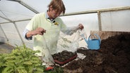 pflanzen im sommer mit stecklingen vermehren ratgeber garten. Black Bedroom Furniture Sets. Home Design Ideas