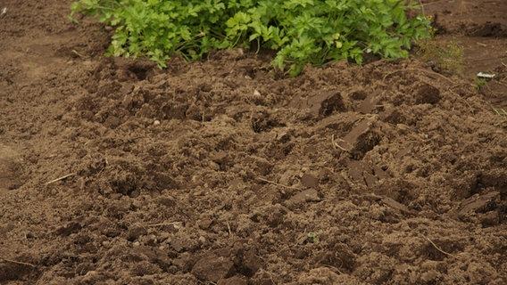 Umgraben ist nicht immer notwendig ratgeber for Boden umgraben