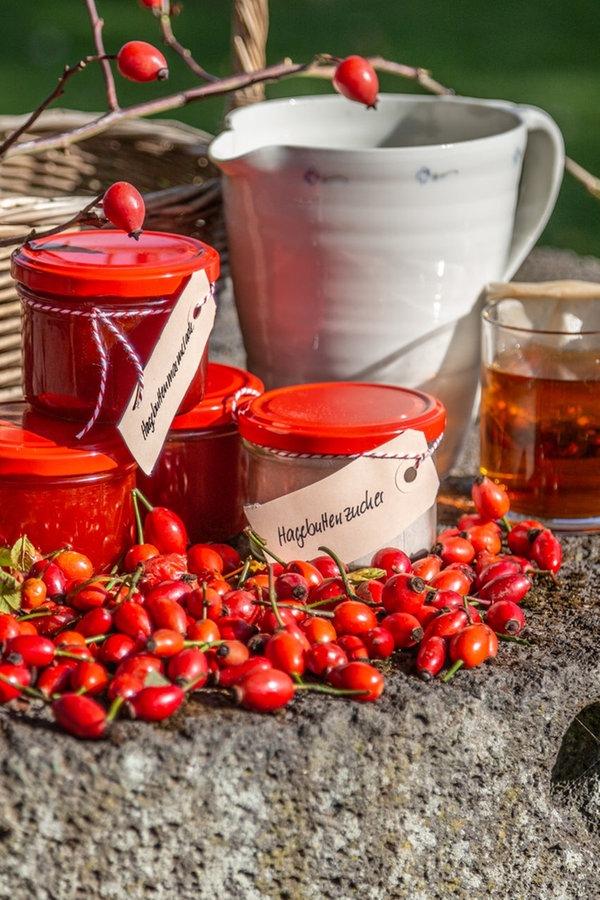 Hagebutten ernten und Marmelade oder Tee herstellen