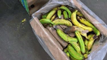 Bananenkiste © NDR Foto: Screenshot