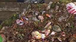 Ein Haufen Biomüll mit Plastiktüten dazwischen. © NDR