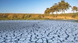 Ein ausgetrocknetes Wasserloch auf einer Viehweide, dessen Boden sich aufspaltet. © Wilfried Dunckel Foto: Wilfried Dunckel