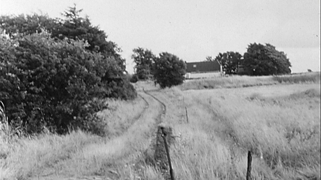 Dänische Grenze