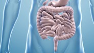 Graphic of the bowel © Fotolia.com Photo: ag_visuell