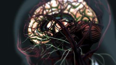 Gehirn, grafisch dargestellt © NDR