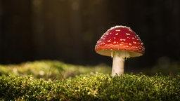 Pilze Im Vergleich: Giftig Oder Essbar?