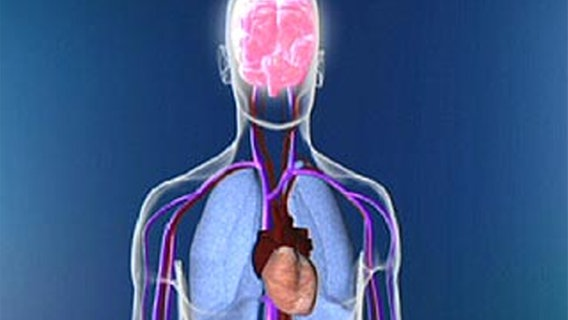 Schlaganfall Was Kommt Nach Der Reha Ndrde Ratgeber Gesundheit