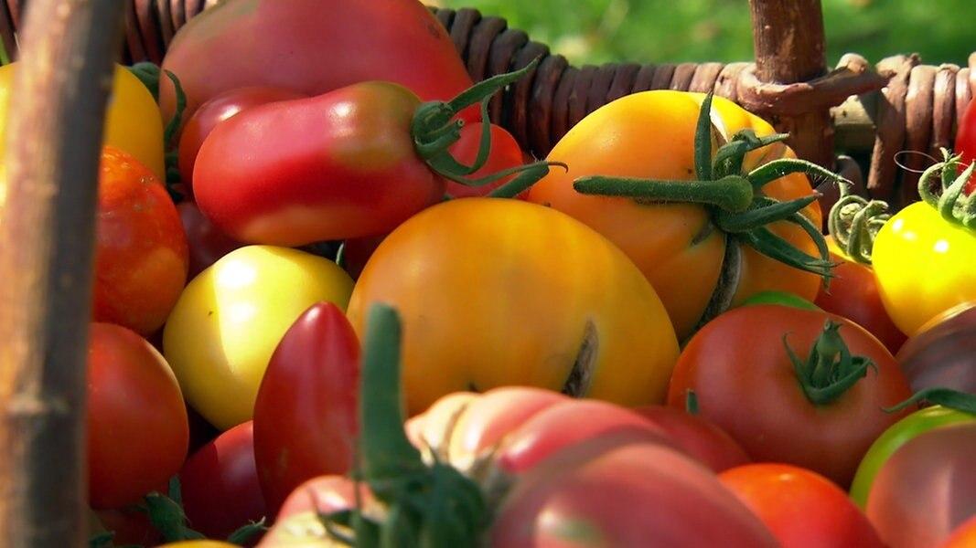 tomaten gesund und knackig ratgeber gesundheit. Black Bedroom Furniture Sets. Home Design Ideas