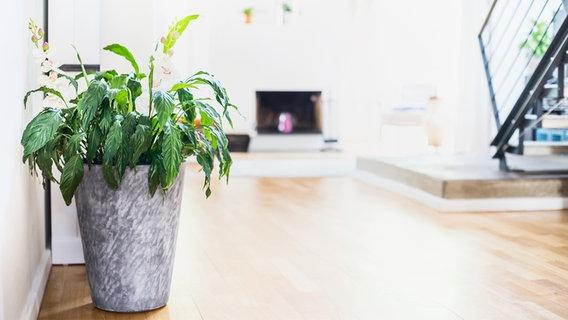 zimmerpflanzen sorgen f r gesunde raumluft ratgeber gesundheit. Black Bedroom Furniture Sets. Home Design Ideas