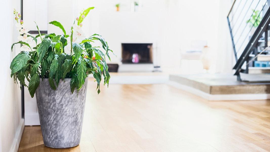 zimmerpflanzen sorgen f r gesunde raumluft. Black Bedroom Furniture Sets. Home Design Ideas