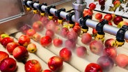 Farbe und Größe ist bei Mostobst egal. Saftig sollte der Apfel aber sein! © NDR/Katrin Richter